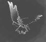 CEIE colombe