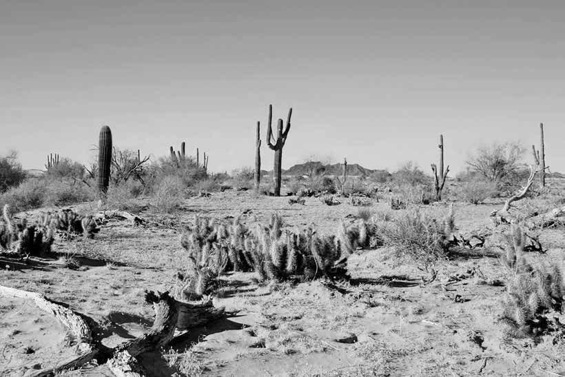 desert7