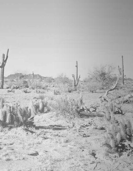 desert8b